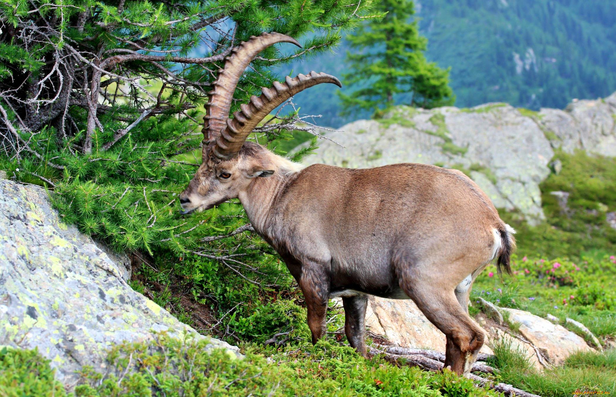 животный мир гор фото русский язык слово